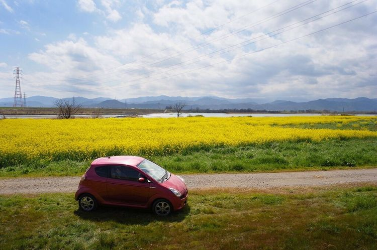 Yellow Flower Spring Has Arrived 徳島県 Landscape Canola