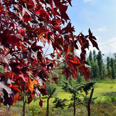Motel Ghoo Red Green Nature Fall Blue Insiran1 Insiran @motelghoo