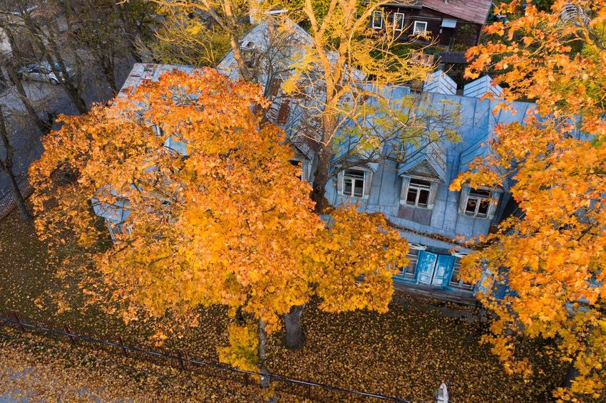 Old house Plant Architecture Built Structure No People Growth Building Exterior Yellow Day Nature Autumn Tree Building Outdoors Beauty In Nature Change High Angle View Full Frame House Wall - Building Feature