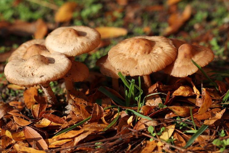Close-up of mushrooms growing on field