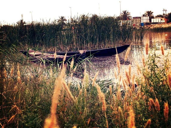 نهر دجله