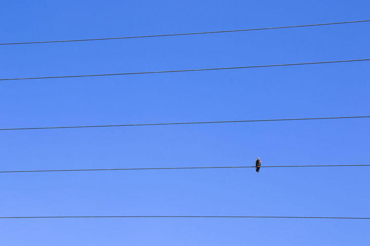 Low angle view of birds on cables against blue sky