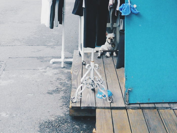 Spot the dog behind the blue door. The owner keep called it to go inside the shop, this is the reason of the unhappy face. Haha. Telling Stories Differently Travelling Photography Travel To Taiwan Trip To Taiwan Travel Photography Urban Photography Getting Inspired Blue Wave Simple Moment Simplicity Minimalism Journal Journey Journalist Photography Journalist Dog Doggy Pet Blue Door Showcase July