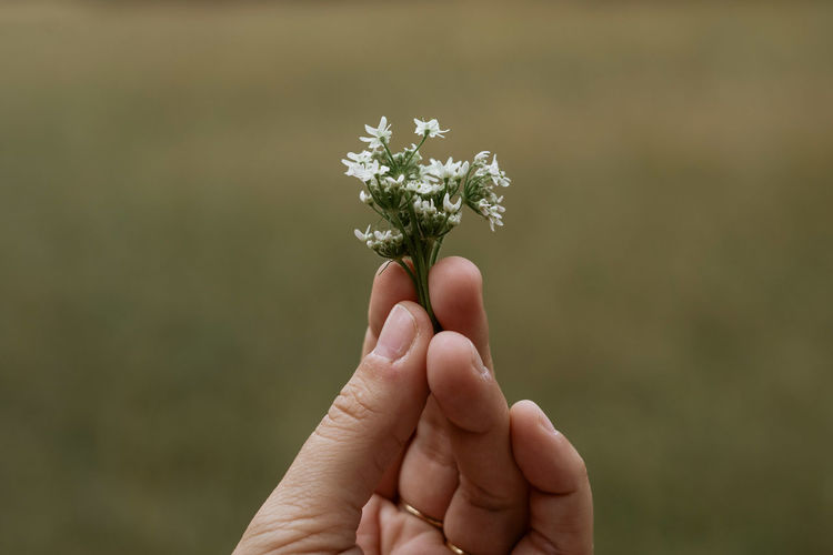 Cropped image of hand holding small plant