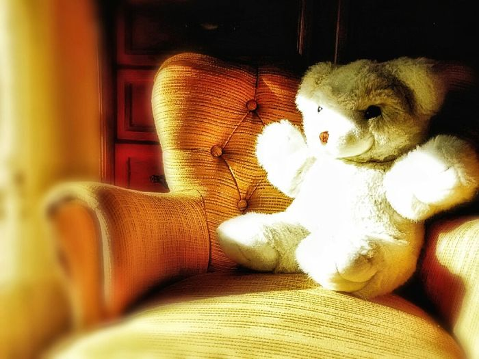 Childhood memories Abstraction Animal Representation Blur Charming Childhood Comfortable Couch Gifts Of Love Home Homesickness Indoors  Lovable Teddy Bear Loving Memories ❤ Relaxing Still Life Sun Light Photographic Memory Sunlight And Shadow Teddy Bear Tender Toy Warm Colors Yearningtogobackintime Freelance Life