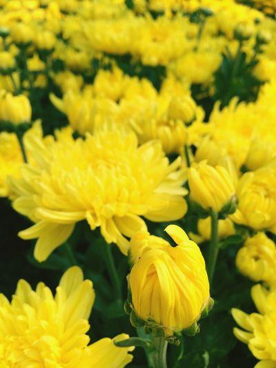 ? Flowers 23/9 Park Khodi♡ Tết