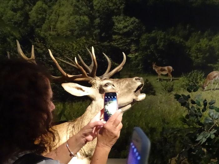 Headshot Antler Young Women Deer