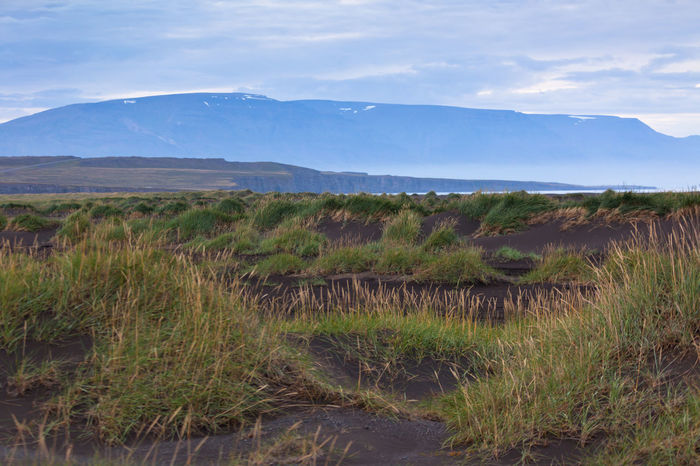 Black Volcanic Ash Dunes in Iceland Ash Beauty In Nature Black Day Dunes Extinct Field Grass Gray Grey Iceland Landscape Lava Mountain Nature No People Outdoors Scenics Silhuette Sky Tranquil Scene Tranquility Volcanic Landscape