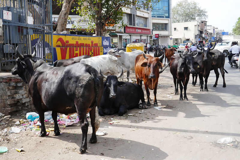Horses on road in city
