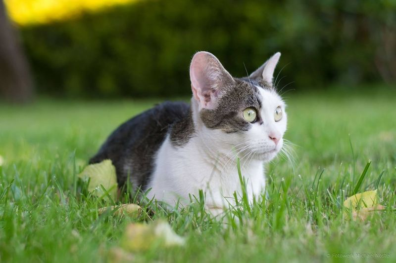 Cat Animal Themes Animal Feline Portrait One Animal Domestic Animals cat Pets Domestic Cat
