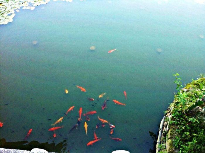 Fish Oriental