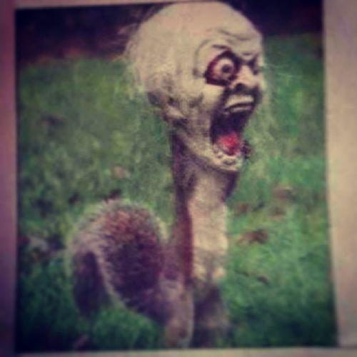 Terror squirrel!<3 Funny Terrorsquirrel Squirrel Mask L4l F4F Tag4like Like4like Like Followme Likeit Loveit Goood Like Follow Muchlove