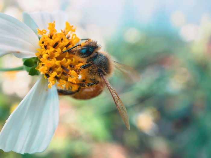Bee 🐝 Stamen