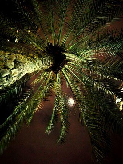 Nature No People Outdoors Tree Moon Moonlight Beauty In Nature Sky Night Mobilephotography Huaweiphotography Huawei P9 Leica Loveforphotography Qanat Al Qasba Sharjah Sharjah Uae Tree