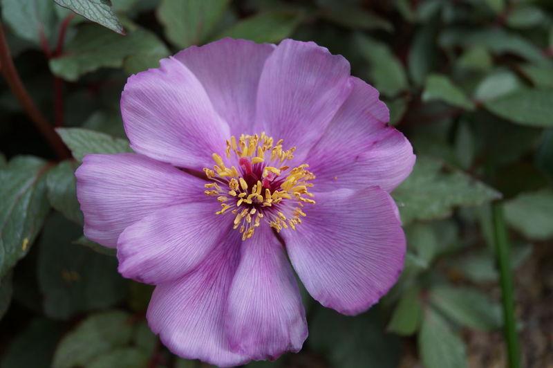 Flowers 🌸🌸🌸 Kew Gardens Plants Royal Botanic Gardens Macro_collection Macro Photography