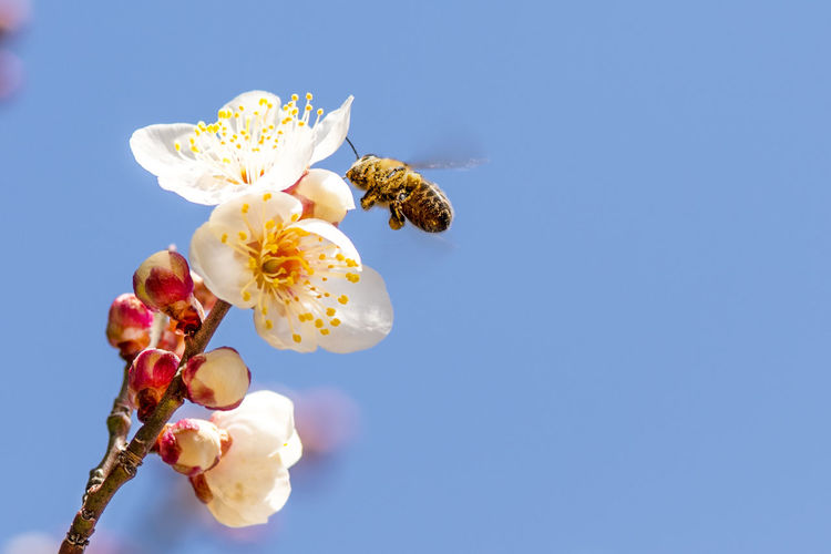 Low angle view of insect on flower against blue sky
