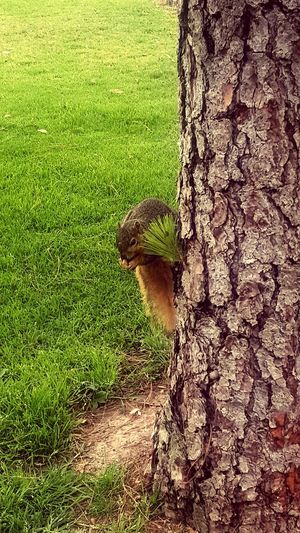 My Commute Park Walk Squirrel Nature Walking Along The Way Along The Road When You Look Notice The Details Checking Out Nature