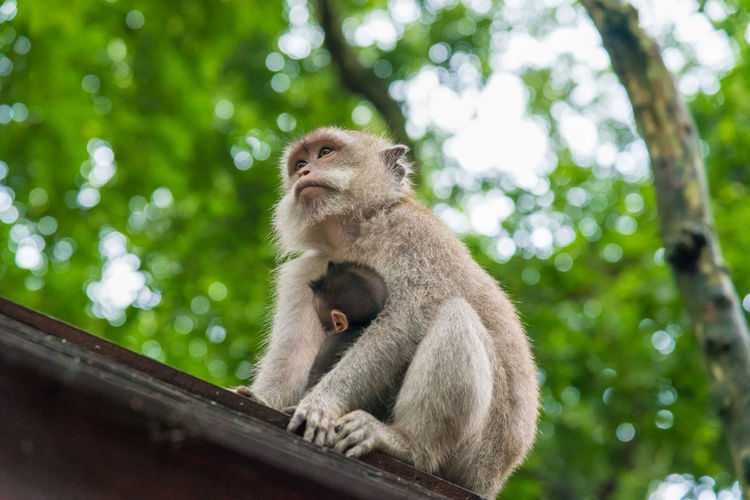 Low Angle View Of Monkey Family Relaxing On Wood Against Trees