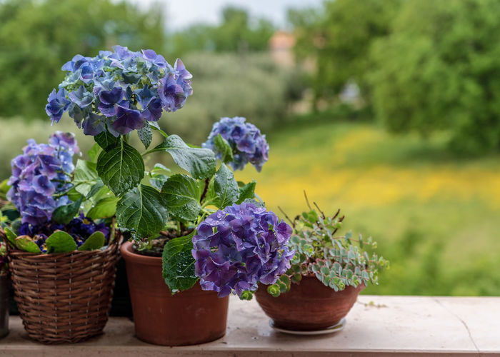 Plant Flowering Plant Flower Growth Freshness Nature Purple Vulnerability  Leaf Beauty In Nature Close-up Focus On Foreground Fragility Potted Plant Plant Part No People Day Basket Container Outdoors Flower Head Flower Pot Lilac Italy Italia Italy❤️ Italy🇮🇹 Beauty In Nature Beauty Beautiful Architecture Arch Architecture_collection Architectural Feature