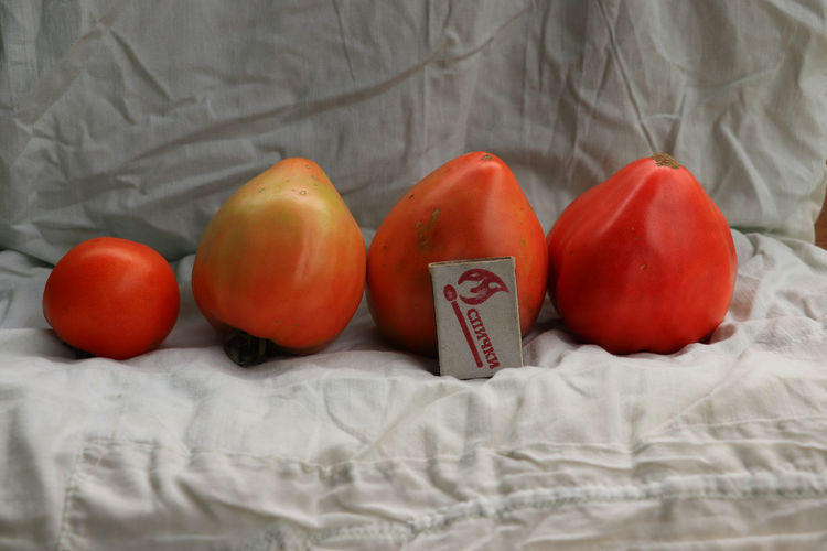High angle view of tomatoes on bed