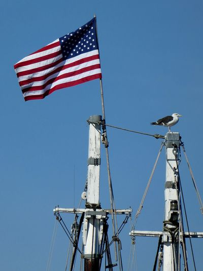 American Flag Identity Pride Culture Outdoors Fluttering Tall Flying Clear Sky Patriotism Masts And Water Seagull High Section Perching Bird Clear Sky U.S.A Nautical Vessel ZoomInToDetail Blue Sky Blue