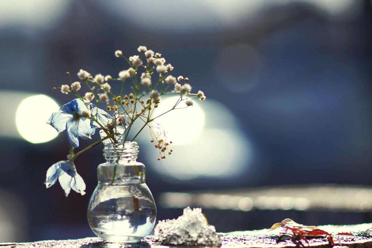 こころに花を Flower