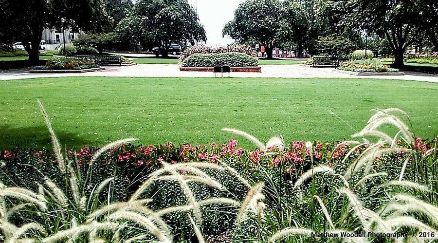 'Campus green' Campus Grounds Colour Of Life Auburn University College Grounds Auburn, Alabama College Campus College Life