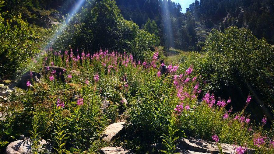 Colour Of Life Enjoying Life Mountain_collection Flower Collection Val D'Aran