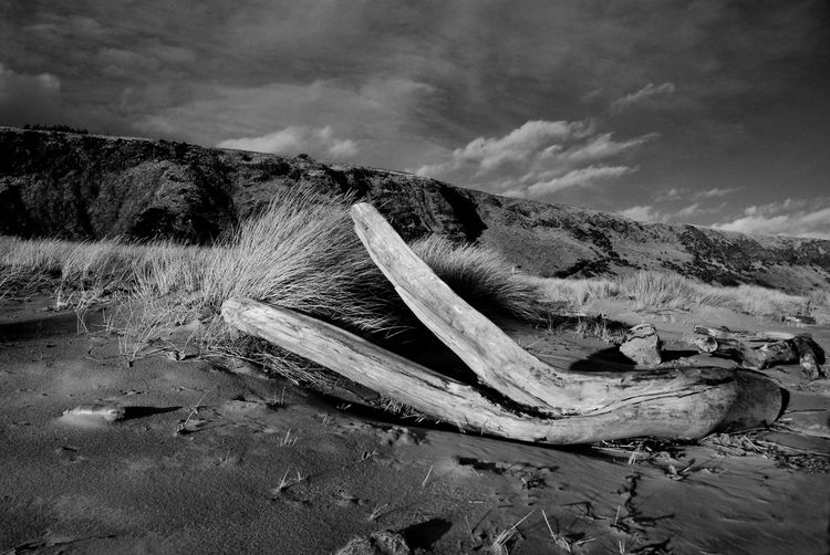 Beauty In Nature Cloud - Sky Day Drift Wood On Beach Landscape Monochrome Mountain Nature Nautical Vessel No People Outdoors Scenics Sky Tranquil Scene Tranquility Wood - Material