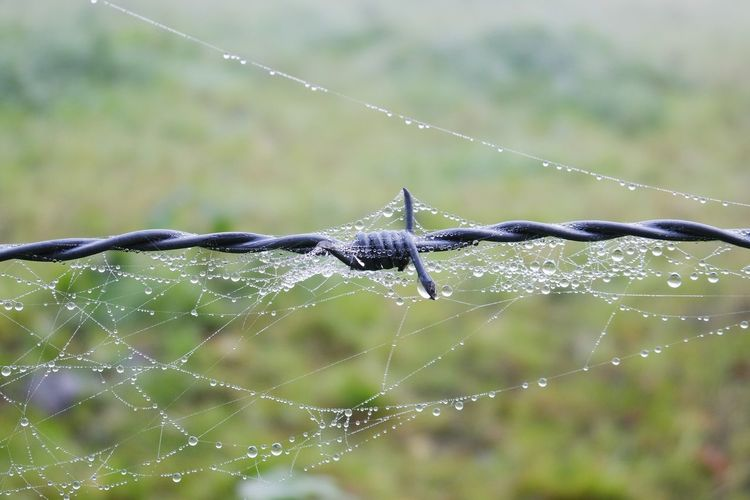 dew on wire... Wire Barbed Wire Dew Drops Spiderweb Cobweb Dew On Cobweb Natures Diversities