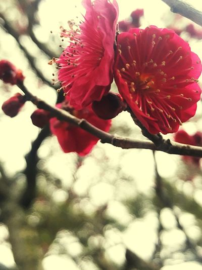 Plant Flower Beauty In Nature Flowering Plant Growth Freshness Close-up Nature Vulnerability  Petal Red Fragility Day Tree Blossom Inflorescence Focus On Foreground Flower Head Outdoors No People