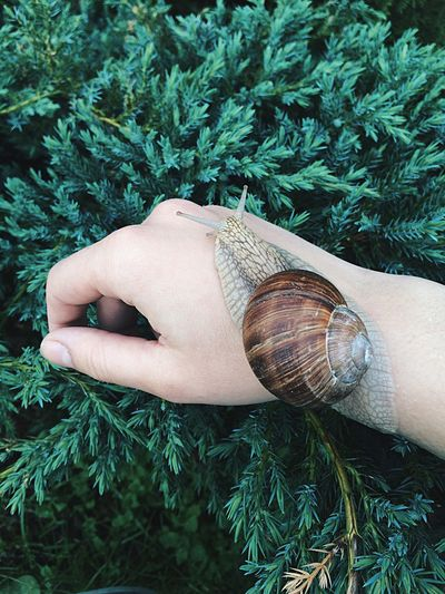 Cropped hand of woman with snail on plants