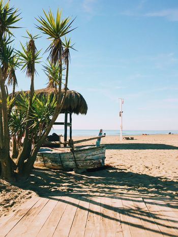 Sea fall Sea Beach Palm Tree Water Nature Horizon Over Water Scenics Beauty In Nature Sky Sunlight Sand Tranquility Tranquil Scene Day Clear Sky Outdoors No People Tree Lifeguard Hut VSCO (null)Vscocam (null) Vscogood