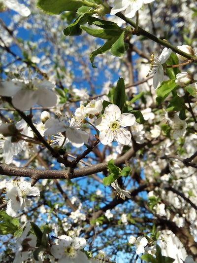 Spring. First Eyeem Photo