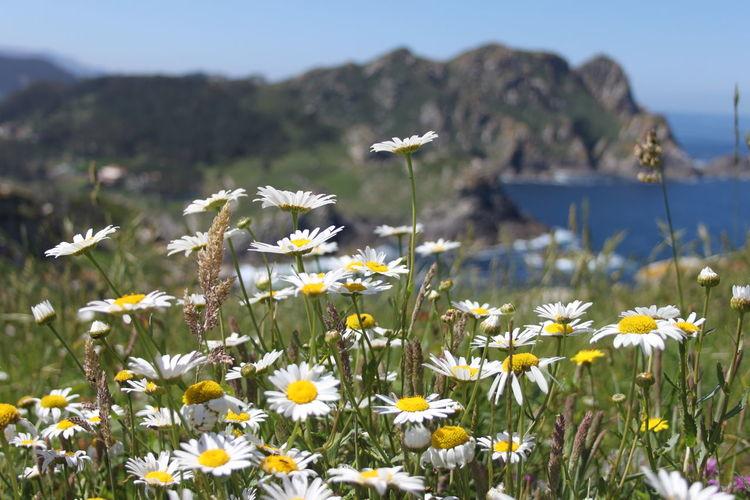 Islas Cies Beauty In Nature Flower Nature Islas Cies Ciesparadise Inlove Nature Lover