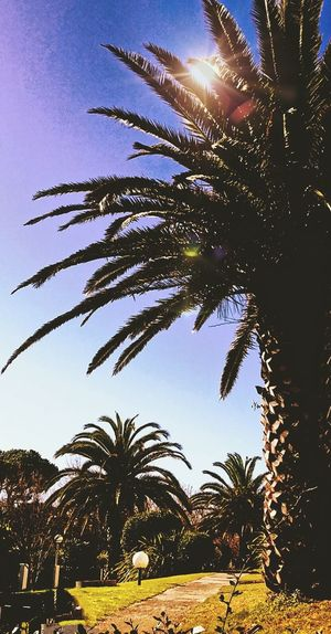 Palmiers 🌴👣 EyeEm Best Shots Ciel Nature Tree_collection  Nature_ Collection  Nature Photography Trees And Sky Treescollection
