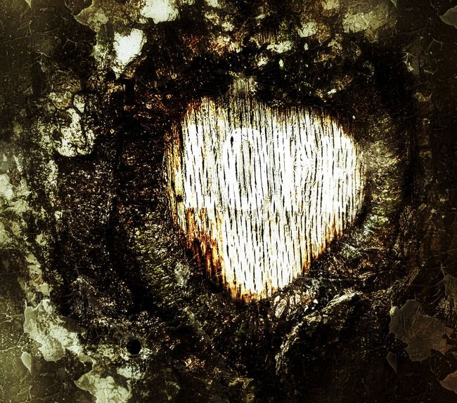 Backgrounds Full Frame Communication Text Textured  No People Close-up Day Beauty In Nature Love Photography Love❤ Love To Take Photos ❤ Love ♥ Love♡ Love Without Boundaries Carved Wood Carved In Wood Carved Tree