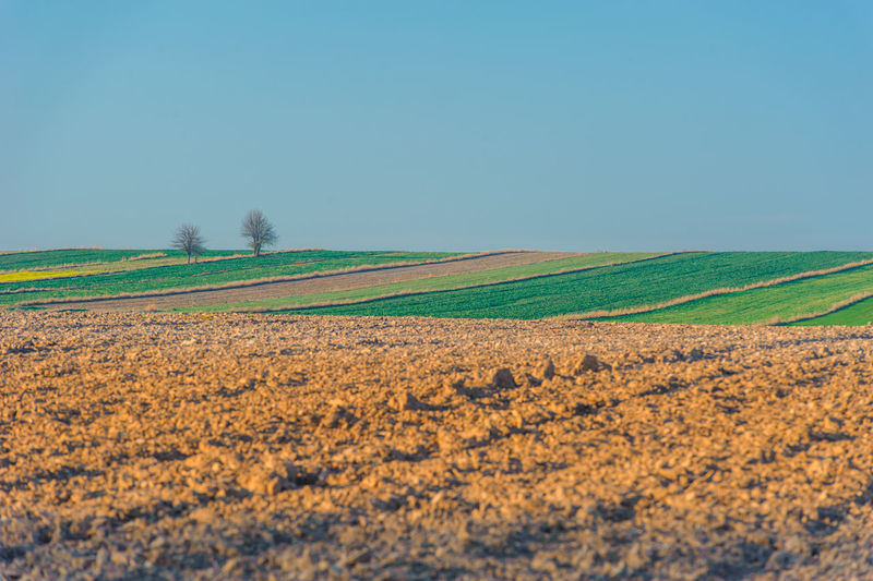 Scenic view of agricultural field against clear blue sky