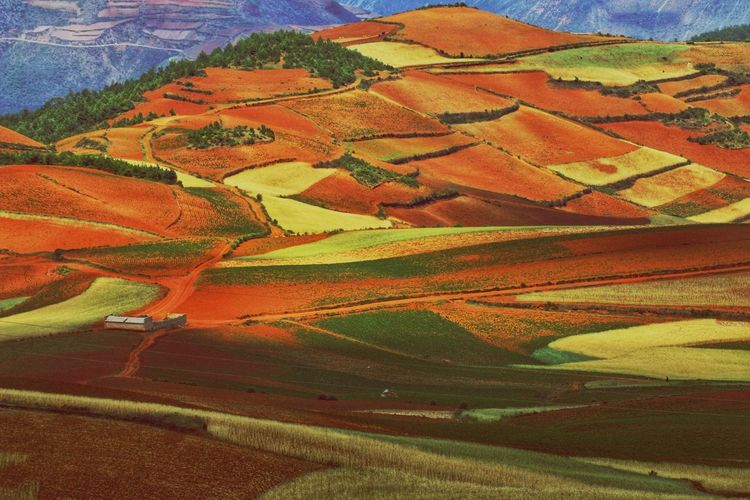 Yunnan China Photos Landscape_photography Landscape_Collection China Rural Scene Patchwork Landscape Agriculture Aerial View Full Frame Field Backgrounds Farm Landscape Cultivated Land Rice Paddy Plantation Agricultural Field Terraced Field Cereal Plant Rice - Cereal Plant