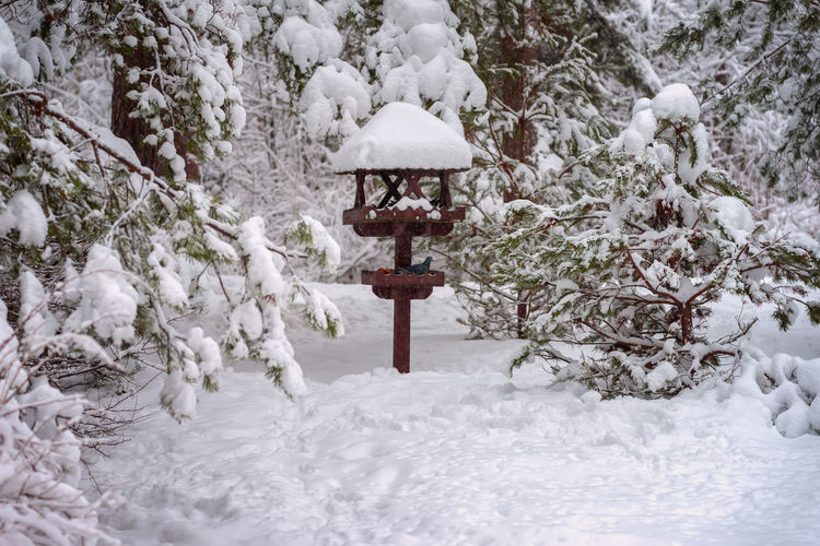 Picturesque bright winter landscape of a forest with different trees covered with snow. Winter wooden bird feeder, covered with snow, winter day. Natural winter landscape Snow Winter Cold Temperature Covering Tree Beauty In Nature Nature Tranquility Frozen No People Tranquil Scene Outdoors Extreme Weather Snowing Plant White Color Field Day Scenics - Nature Bird Bird Feeder Wooden Landscape Forest Covered