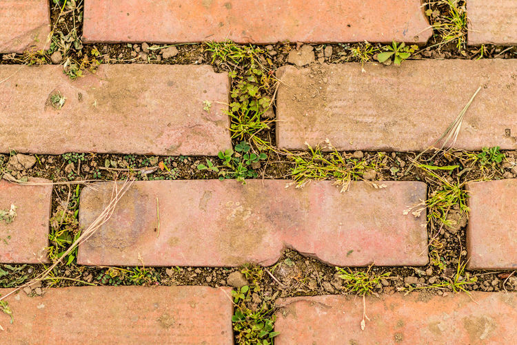 Backgrounds Brick Wall Close-up Full Frame Grass Growth Path To Nowhere Pathway Pattern Wall Wall - Building Feature