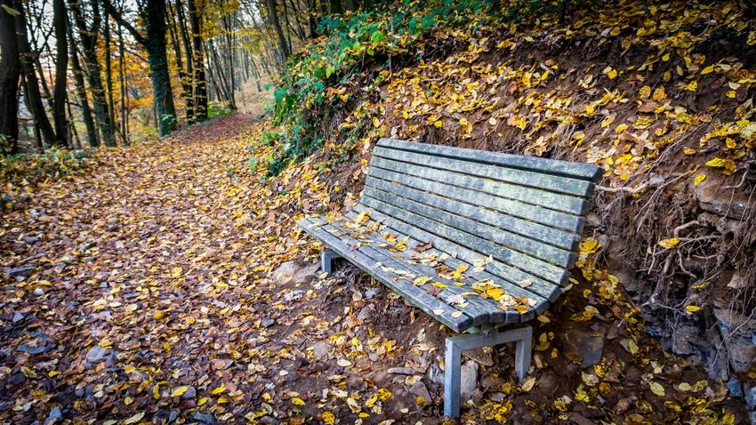 Autumn Autumn Colors Bench Fall Beauty Footpath Outdoors Park Bench Tree Trunk