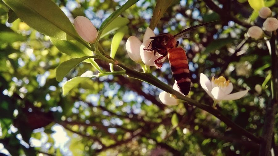 Bee Tree First Eyeem Photo