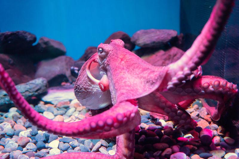 Close-up of octopus swimming in aquarium