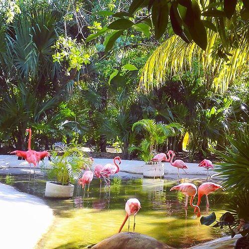 Señoras y señores, el Flamingario Fenicotteri Flamingos