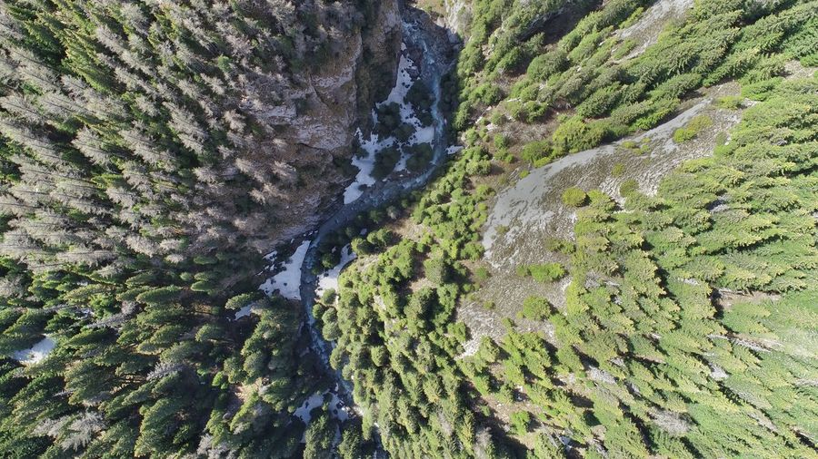 Aerial Photography Picea Abies River Aerial View Summer Exploratorium Aerial Shot Backgrounds Full Frame High Angle View Close-up LINE Plant Life Marking Leaves Blade Of Grass Growing
