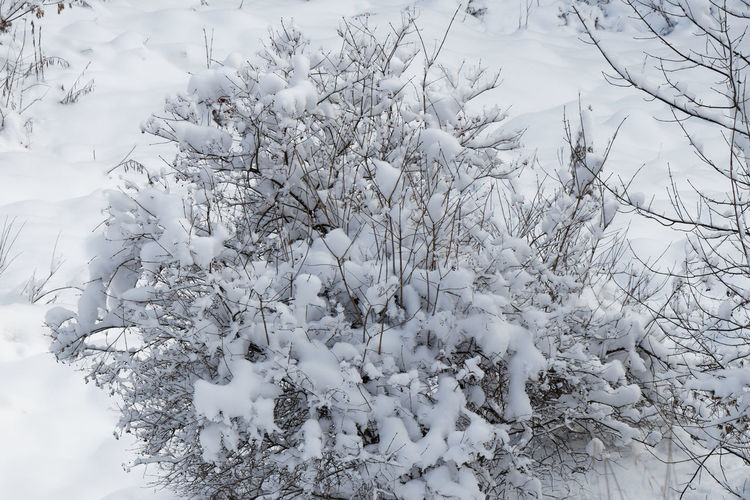 Close-up of snow covered plants on land