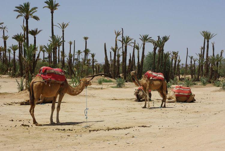 Deserts Around The World The Sahara