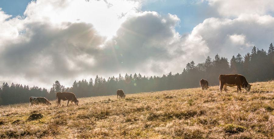 Morgensonne in Bernau Autumn Cloud Cloudscape Cloudy Fog Golden Hour Grassy Landscape Nature Sky
