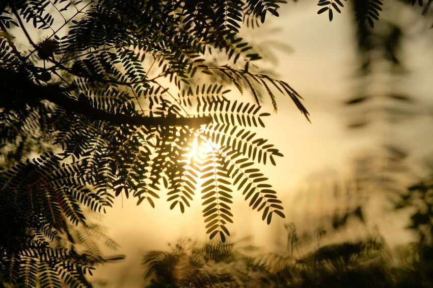 Hong Kong Nature Nature Of Beauty Plant Tree Beauty In Nature Close-up Day Fujifilm Hong Kong Island Nature_collection No People Outdoors Palm Tree Sky Sunset Tree